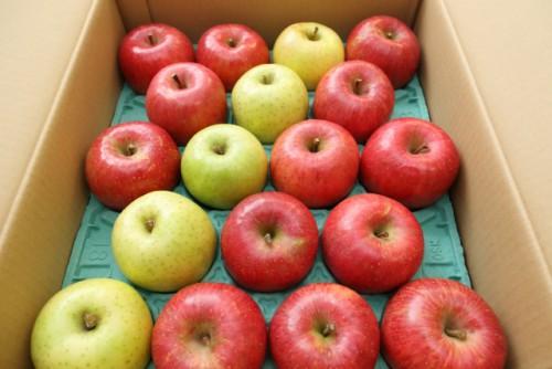 紅白りんご01